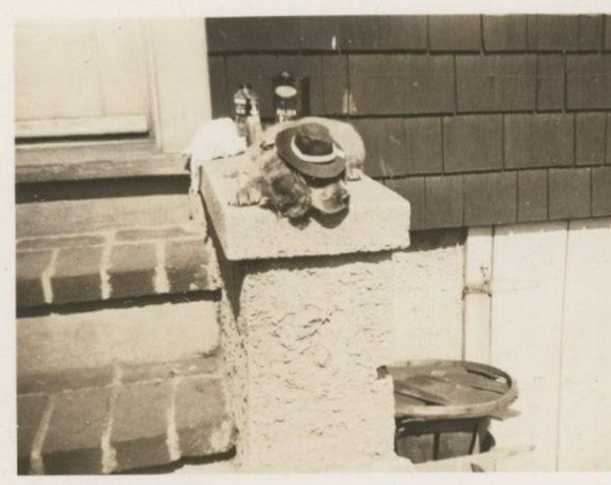 Vintage Snapshot Photo: Guard Dog, 1946 [811738]