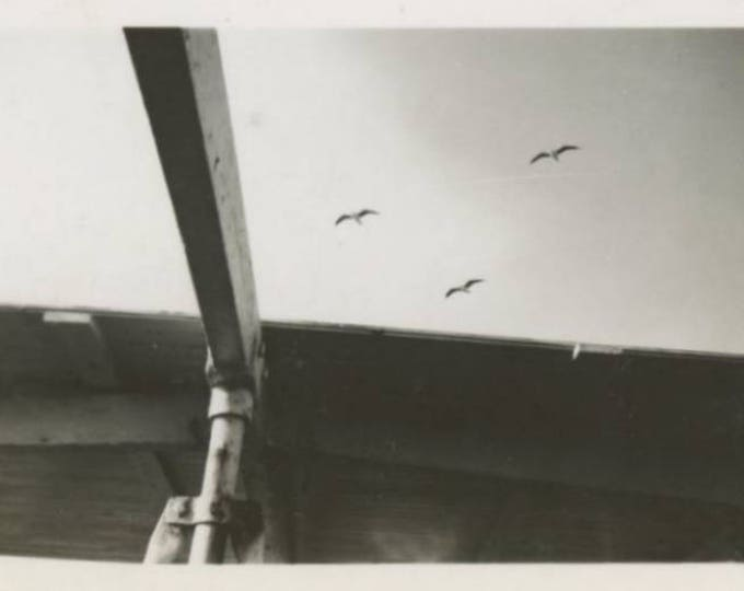 Vintage Mini-Photo Snapshot: Seagulls, c1940s (76589)