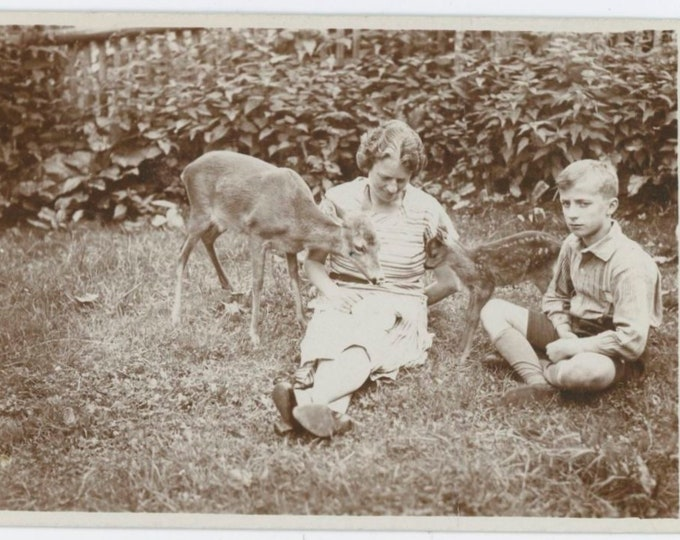 """Vintage Snapshot Photo: """"Liesl and Fritz from Czechoslovakia with Two Deer, 1933"""" [810735]"""