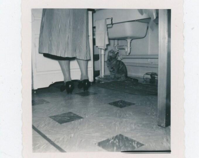 "Vintage Snapshot Photo: ""Rusty, 1950"" [91767]"