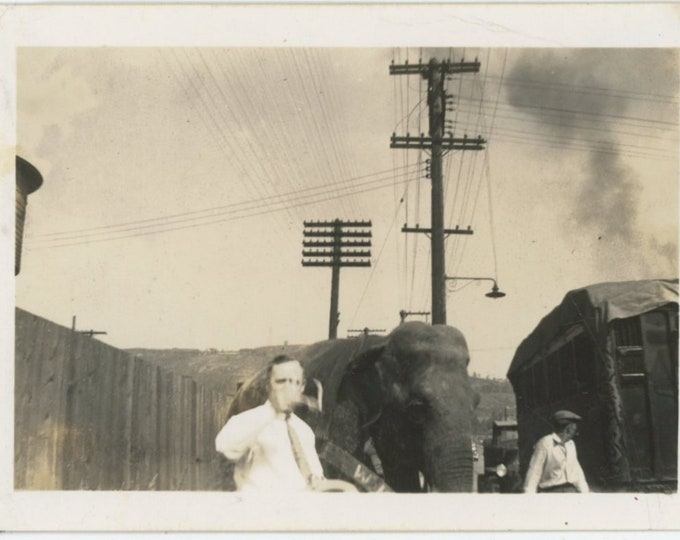 Vintage Snapshot Photo: Elephant, c1930s [89726]