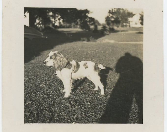Vintage Snapshot Photo: Dog & Photographer Shadow, c1940s (71540)