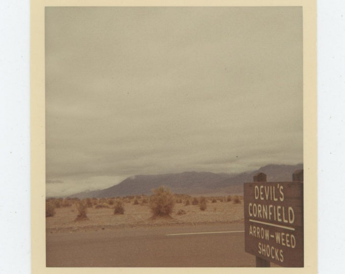 Vintage Snapshot Photo: Devil's Cornfield, Death Valley [86687]