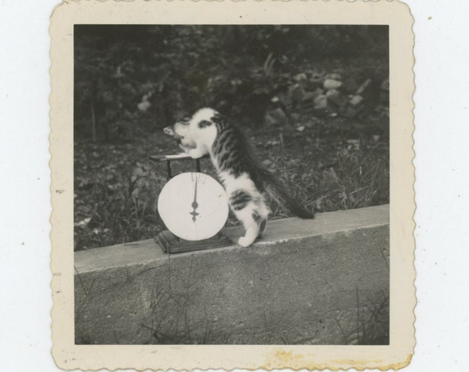 Vintage Snapshot Photo: Weighing In; Cat on Scales, 1946 [89723]