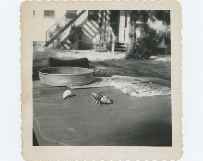 Snails: Vintage Snapshot Photo (712631)