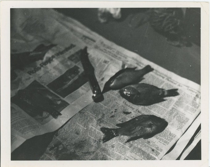 Vintage Snapshot Photo: Day's Catch; Fish on Newspaper (88712)