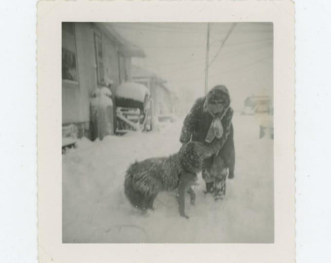 Vintage Snapshot Photo: Dog in Blizzard [83658]