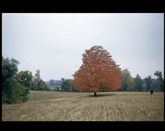 Durham, ONT, 1956: Kodachrome Red Border 35mm Slide/Transparency Vintage Photo Snapshot (7316-16)