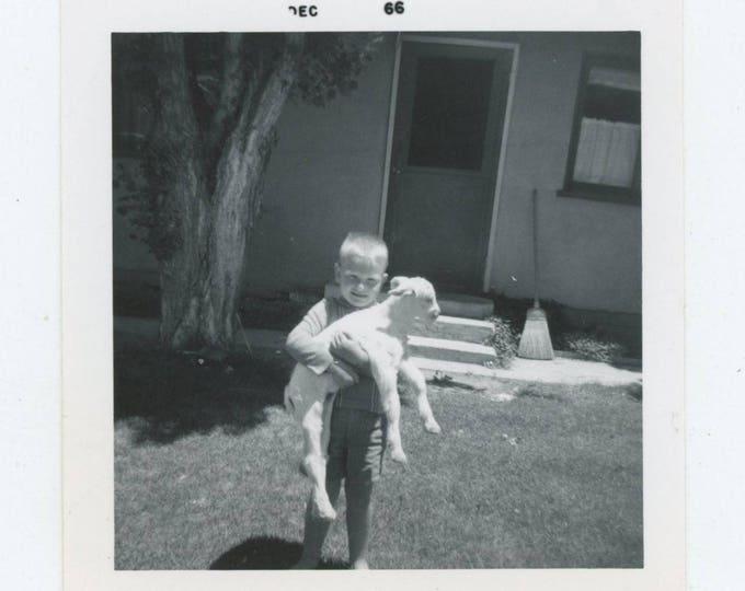 Vintage Snapshot Photo: Boy & Lamb, 1966 [83655]