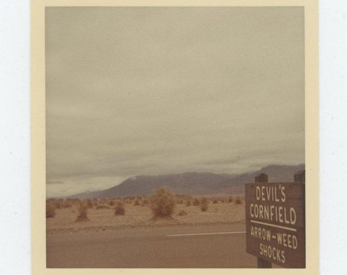 Vintage Snapshot Photo: Devil's Cornfield, Death Valley [86687]