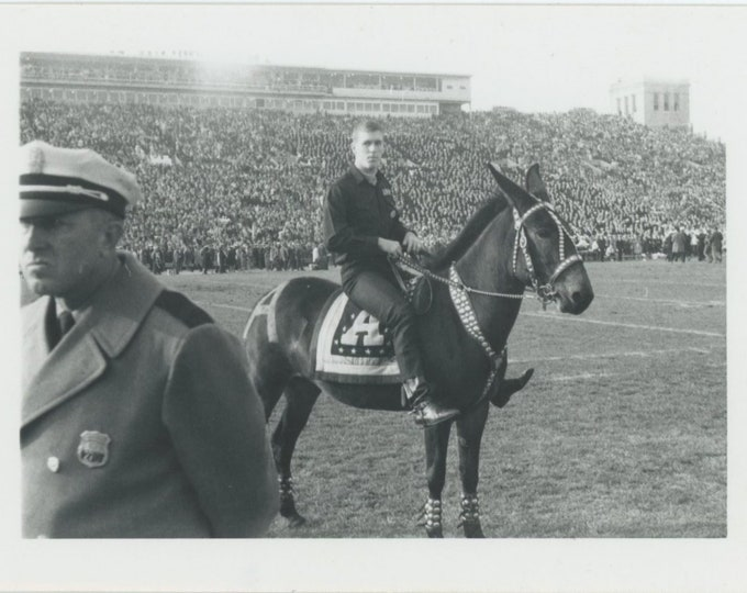 Vintage Snapshot Photo: Cop, Army Mule Mascot at Football Game [85676]