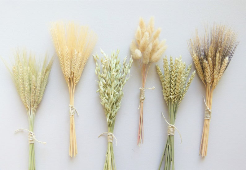 Dried Grass Bunches Dried Flowers Dried Flower Sampler Set image 0