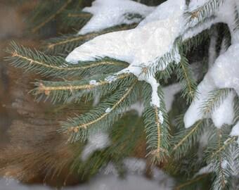 Winter Tree Fine Art Photography , Wall Art , Home Decor -The Beauty of Winter , 8 x 12