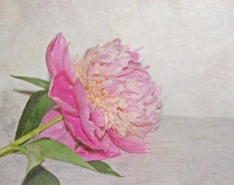 Pink Peony Fine Art Photography , Floral Wall Art , Shabby Chic Home Decor , Spring -  Flower for you , 8 x 10