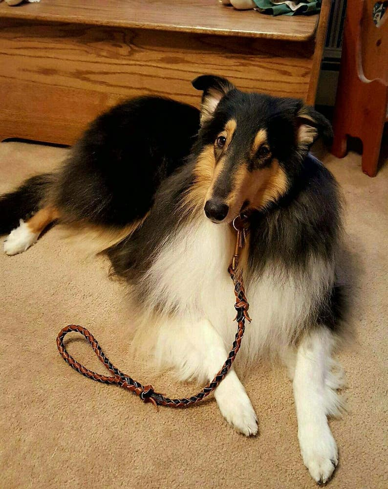 4 Braided black and rusty tan strand leather traffic leash 516 X 24 solid brass swivel bolt snap LOOKS FANTASTIC on COLLIES