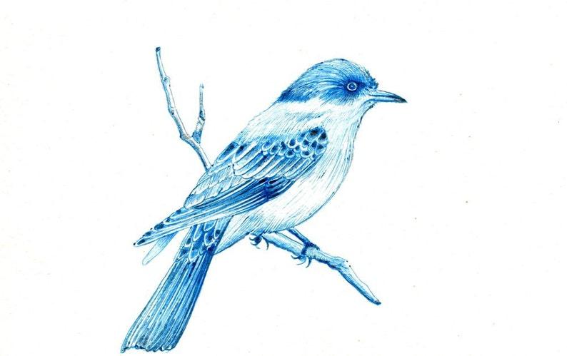 Blue Bird Art Print Of An Original Drawing Available 5x7 Or 8x10