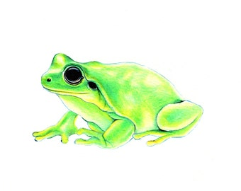"Green Frog art print of an original drawing available 5x7"" or 8x10"""
