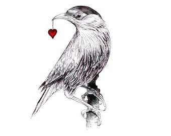 "Gift:  Bird art print of an original drawing available 5x7"" or 8x10"