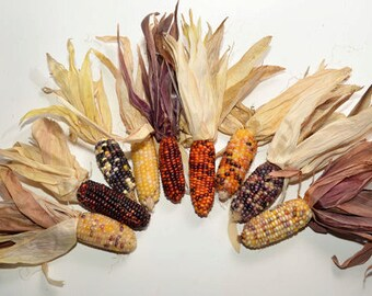 "Mini Indian Corn, 25 pieces 2"" to 3"", dried colored corn, fall decoration"