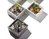 """4"""" Square concrete planter/ concrete succulent planter/ planters /gift"""