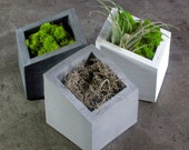 ANGL set of 3 Concrete Planters