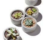 Cylinder concrete planters/ concrete succulent planters/ planters / cylindrical / circle/ table centerpiece/wedding table centerpieces/ gift