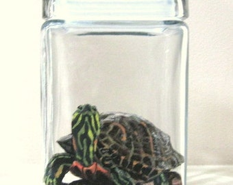 Turtle Food Jar, Red Eared Slider, Pond Turtle, Custom Glass Canister, Pet Food, Hand Painted Glass, Fish Food, Turtle Decor
