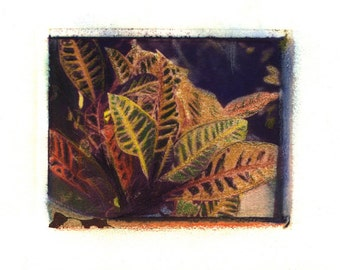 Croton -  Archival Print of an Original Polaroid Transfer, Signed Limited Edition 8x10 Matted