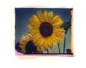 Arlene's Sunflower -  Archival Print of an Original Polaroid Transfer, Signed Limited Edition 8x10 Matted