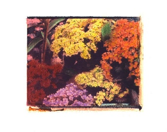 Verbena -  Archival Print of an Original Polaroid Transfer, Signed Limited Edition 8x10 Matted