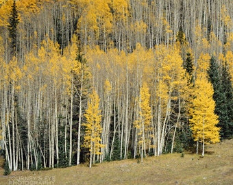 Nature photography, mountain art, Colorado photography, aspen trees, home decor, wall art, nature print, landscape - Aspen Patterns