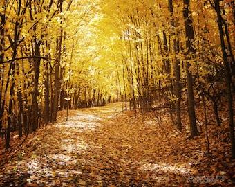 Golden Fall - nature photography, autumn, gold, yellow, forest, dreamy landscape, fall decor, wall art