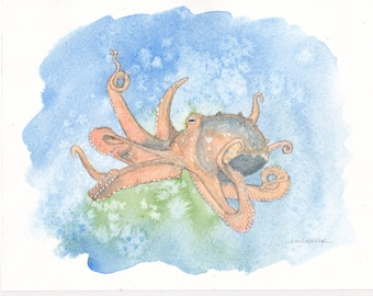 Octopus - Sea Creatures