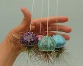 Mini Jellyfish Air Plant Hanger