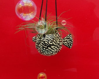 Map Puffer Fish Hanging Planter, Small , Air Plants , Tropical Fish