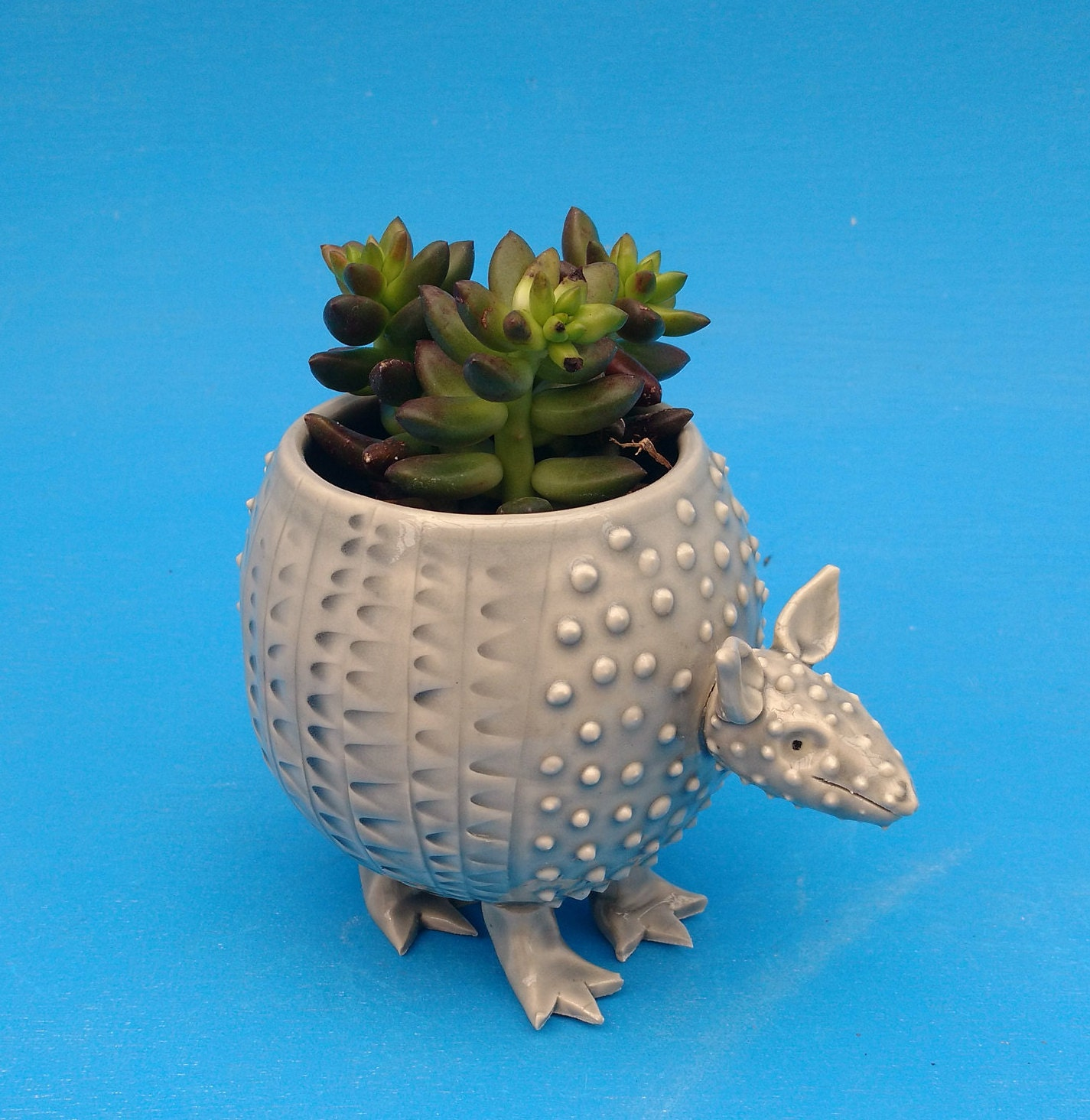 Small Armadillo Planter Succulents Air Plants | Etsy - photo#31