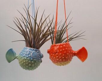 Hanging Puffer Fish Planters, Gradient Color, Air Plants, Succulents