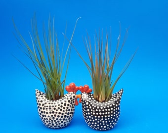Large Chicken Planters, Air Plants, Succulents, Chicken Lovers