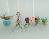 Small Collection of 5, Octopus Garden, Hanging Air Plant Holders, Squid, Octopus, Jellyfish, Puffer Fish, Nautilus.