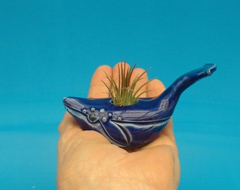 A Baby Spouting Whale, Air Plant Holder