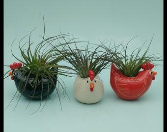 Chickens, Medium Chicken Planters, Air Plants, Succulents, Farm Table Decor