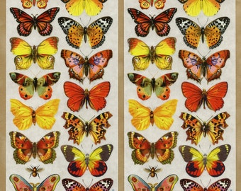 BUTTERFLY STICKERS, Orange  Butterfly Stickers, Nature Stickers, Yellow Butterfly Stickers, Insect Stickers-Violette Stickers, Butterflies