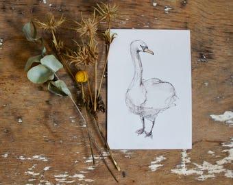 Little Swan Two