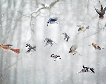 Birds photograph: A Cardinal leads the usual suspects through the forest on their daily romp.