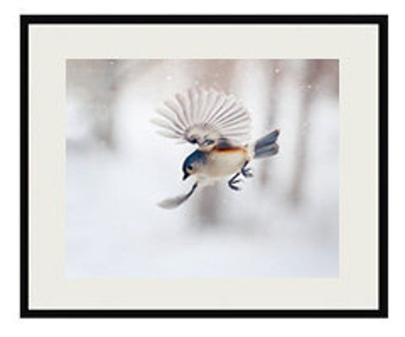 GREY TITMOUSE BIRD Gloss Poster Print Greeting Card Vintage Retro Gift Framed