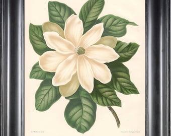 BOTANICAL PRINT Wendel 8x10 Botanical Art Print 11 Beautiful White Magnolia Flower Garden Plant to Frame Interior Decoration Room Design