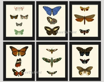 Butterfly Print SET of 6 Prints Beautiful Wall Art Antique Blue Green Natural Science Chart Summer Garden Insect Green Nature Home Decor