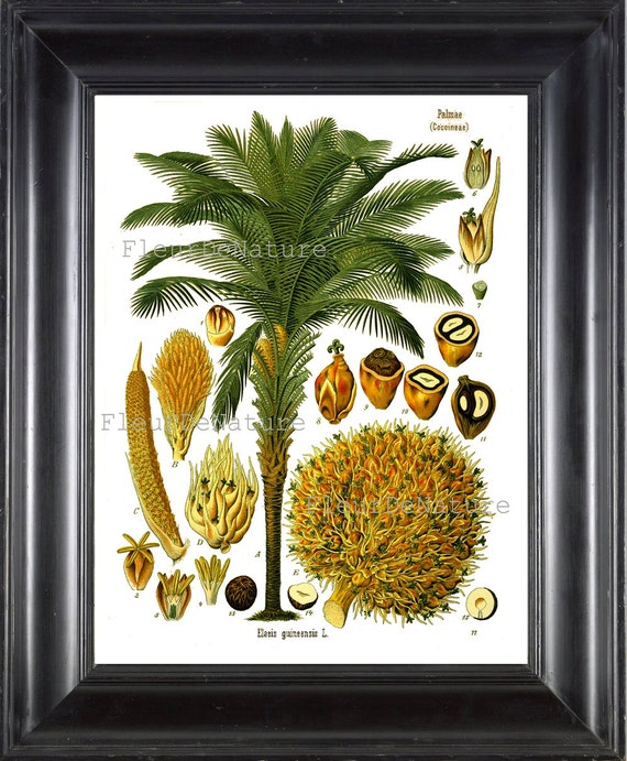 Botanical Print Kohler 8x10 Botanical Art Print 125 Beautiful Etsy