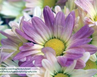 Pink Daisy Fine Art Photo Print