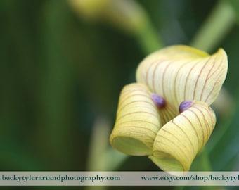Mormolyca Orchid Fine Art Photo Print